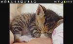 Das ist unser jüngstes Kätzchen Mimi. Es ist weiblich und erst ein halbes Jahr alt. Sie ist sehr verschmust und liebt es zu spielen.