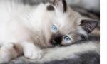 Diese Katze heisst Lûth. Sie ist 4 Jahre alt und sie schläft am liebsten. Sie ist die ruhigste Katze und lässt sich von allen gerne streicheln. Lû