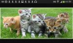 Das sind die Geschwister von Mimi. Der rötliche ist ein Kater der Rest sind Kätzchen. Sie heissen Maunz, Lilie, Keks, Schnurrli & Schnüffel. Sie si