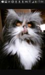 Das ist Moony ein Kater. Er sieht aus als ob er Lykantrophie hat (ein Werwolf ist) und deshalb nannten wir ihn Moony. Anfangs wollten wir ihn Greyback
