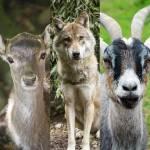 Welches Tier gefällt dir besser?