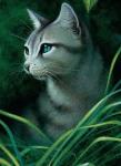 Höhlenflug, ein Schüler des FlussCans ist in Efeusee verliebt. Immer wenn er sie im Wald der Finsternis gesehen hat, hat er gehofft ein Gespräch mi