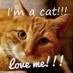 Warrior Cats-Schicksale junger Katzen -1-Die Geschichte von Kleinjunges