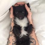 Wie heißt der kleine Hund von ihm?