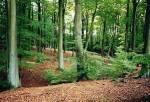 ((big))((green))Das Territorium((ebig))((egreen)) Das Territorium liegt in einem schönen, großen Mischwald mit vieler, verschiedener Beute. Es flies