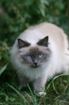 Wasser Namen - Warrior Cats