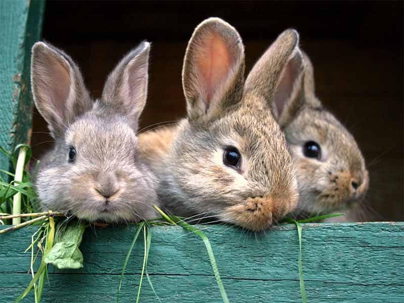 kennst du dich mit kaninchen aus