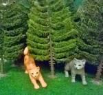 Bist du eine echte SchattenClan Katze