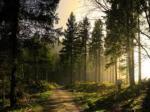 Der Wald: Der Wald wirkt sehr Friedlich, ist gibt sehr viele Tiere die ungefährlich als auch Gefährlich sind Es gibt dort einen Wasserfall, viele B�