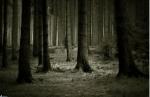 """Du wachst auf und findest dich auf einer Waldlichtung mit vielen Büschen wieder. """"Wer bist du?"""" Du schaust dich um. """"Hier oben du Dumm"""