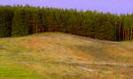 Weiter geht es mit dem Gelände. Eine große Blumenwiese umgeben von Wald.