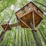 ((bold))Die Baumhäuser((ebold)) Jedes Baumhaus kann vier Personen beherbergen. Zur besseren Unterscheidung sind sie nach Sternbildern benannt (eine v