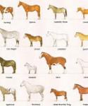 Welche Pferdeart ist NICHT echt?