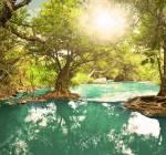 ((bold))Der Wald((ebold)) Im mysteriösen und von vielen gemieden sowie gefürchteten Wald findet man vor allem eins: Bäume. Auch entspringt hier abe