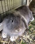 Hält man Kaninchen in Einzelhaltung?