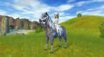 Welches Pferd passt zu mir? (SSO)