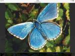 Chaosfail44 ist ein Schmetterling.