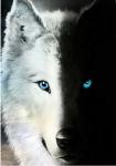 ((Bold))Gespielt von: Batimgirl Luna((ebold)) Name: Sol Rufname: Akuma Alter: 7 Jahre Geschlecht: Männlich Aussehen: Riesiger, sehr muskulöser Wolf