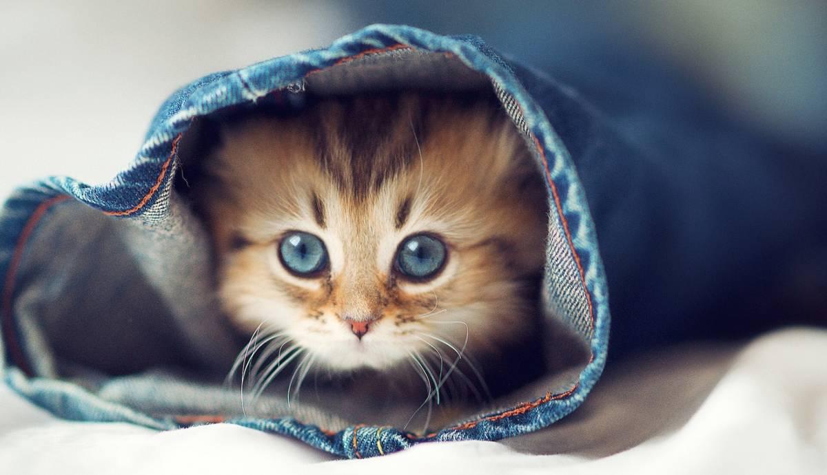 süße katzenbilder