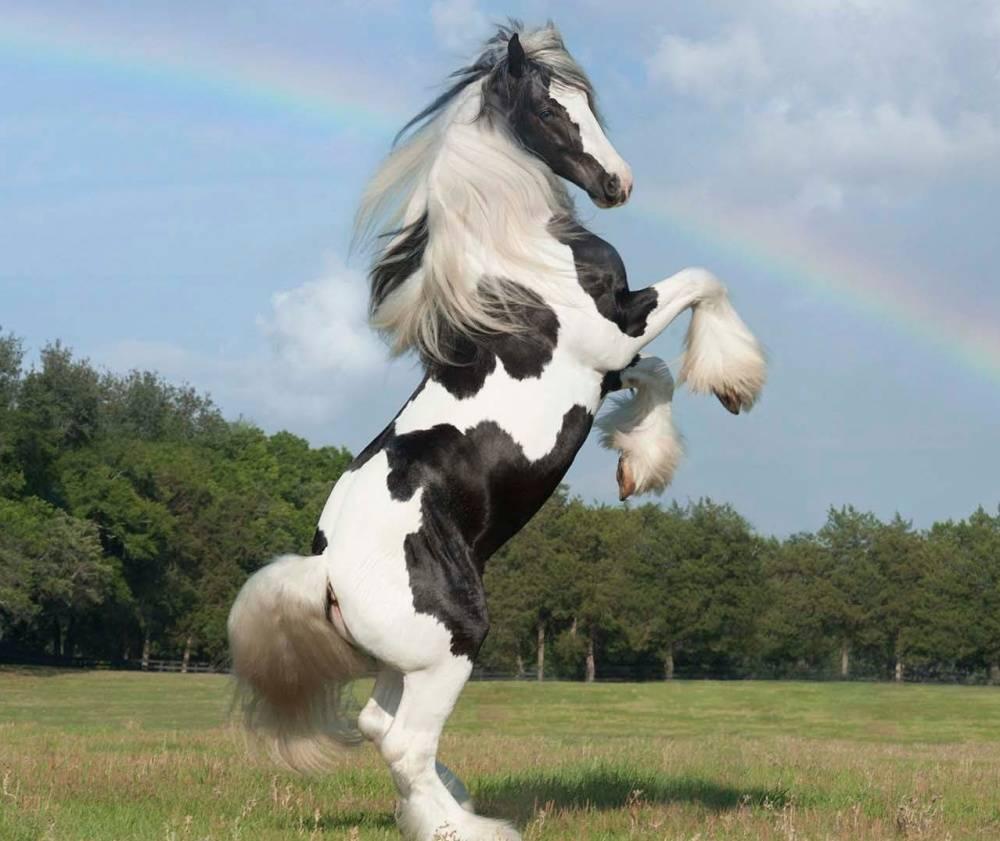 Kann ich mich um ein pferd kmmern die pferden sind schon ungeduldig sie haben altavistaventures Images