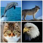 Welches Tier (von diesen 4) magst du?