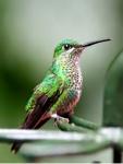 Kolibris können auch rückwärts fliegen.