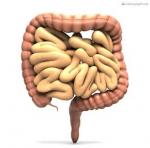 Während eines 75-jährigen Lebens wandern 30 Tonnen Nahrung und 50.000 Liter Flüssigkeit durch den Darm.