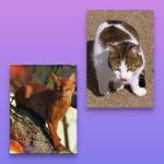 °Flussherz° Charaktere Name: Rotglanz Alter: 65 Monde Geschlecht: W Rang: Krieger Aussehen: langbeinige, schlaksige Katze mit braun-rotem Fell. Sie