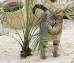 Welches Gesetz rettete Tigerstern das Leben und vernichtete das vieler anderer Katzen?