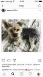 Wieviele Hunde hat Lea?