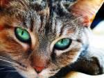 """((big))((bold))Kapitel 5((ebold))((ebig)) """"Katzen des Donner-Clans!"""", hob Böenstern na. """"Heute ist ein guter Tag für den Clan, denn heute wird"""