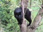 ((bold))((unli))🐾 Das SchattenClan – Territorium 🐾((ebold))((eunli)) Hier gibt es viele Eichhörnchen... Lecker! Außerdem mögen wir den Nade
