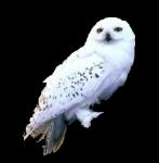 Ok, fangen wir leicht an aus HP und der Stein der Weisen: Wie heißt Harrys Schneeeule?