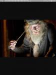 Welcher Zauberstab passt zu dir?