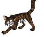 Tiger Stern