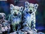 Name: Nachtmusik Alter: 1 Jahr Art: Puma Geschlecht: weiblich Aussehen: weiß, blau mit einer Grünen Nase Charakter: freundlich, schüchtern Lebenstr