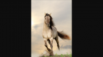 Gespielt von: Zitronenhauch Name: Shira Rufname: Shira Alter: 9 Jahre Geschlecht: Stute Rasse: Mustang Aussehen: graues Fell, rote Mähne und Schweif,