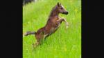 Gespielt von: Ina Name: Lightning Rufname: Light Alter: 1 Jahr Rasse: Mustang-Araber Geschlecht: Stute Geschlecht: Stute Aussehen: siehe Bild Charakte