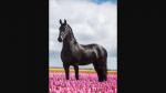 Gespielt von: Pegasus ❤️ Name: Damyon Rufname: Damy Alter: 12 Jahre Rasse: Hannoveraner Geschlecht: Hengst Aussehen: Palomino Charakter: wild, lei