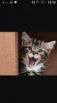 So sind Katzen
