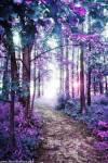 Der Märchenwald: -In den Märchenwald dürfen die Schüler nur mit Erlaubnis eines Lehrers