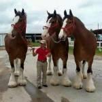 Kommen wir direkt zu denn Drei Pferden. Der Linke heißt Ben. Die daneben ist Lisa. Und die daneben ist Milla. Sie sind Geschwister und werden bei den