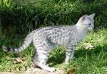 Wer bist du in Warrior Cats