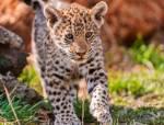 Ich mag ja eigentlich fast alle Tiere aber Jaguarbabys sind so süß!
