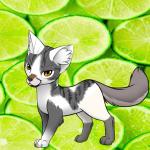 Hier eine Katze von Darki! Ich und Namen...XD