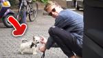Er besitzt einen Hund. 🐶