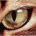 Leopardenfuß ist Tiegersterns Mutter?