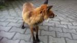 Das Fuchsmädchen Ich spielte mal mit meiner Freundin die 10 wahr wie ich im Garten. Es wurde Dunkel ich sagte zu Sarah komm jetzt rein es wird Dunkel
