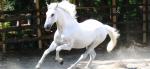 Wie nennt man ein weißes Pferd?
