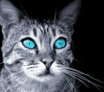 Regeln -Keine Beleidigungen außer die aus Warrior Cats bsp(Flohpelz) -Es muss realistisch bleiben -du musst Spaß haben=) -Auf keinen Fall mobben -es